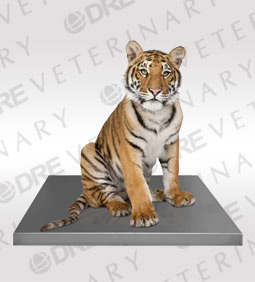 Zoological Platform Scale - Built-in Display