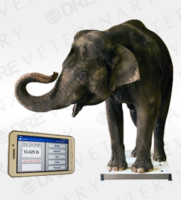 Zoological XL Mobile Platform Scale